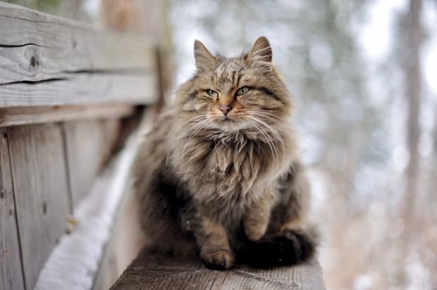 кот сидит на лавочке зимой