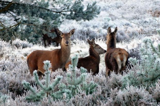 дикие животные в зимнем лесу
