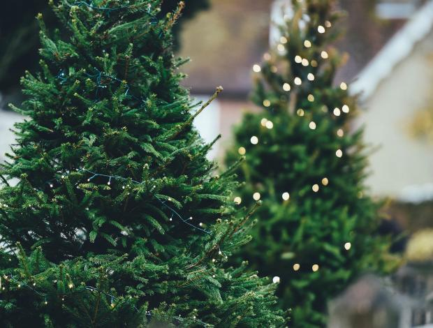 новогодние елки на продаже