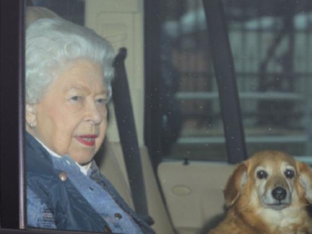 королева с собачкой