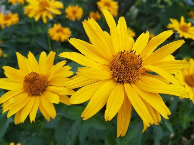 ярко-желтые летние цветы