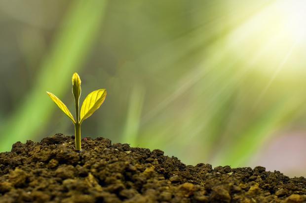 пробившийся из земли росток, солнечный луч