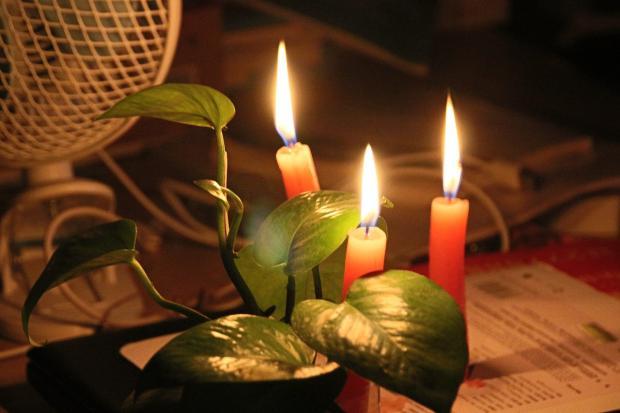 горят три красные свечи рядом с зеленым растением
