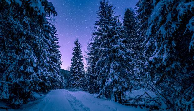 Зимний лес ночью