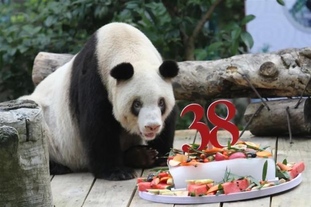 Гигантская панда в зоопарке Китая