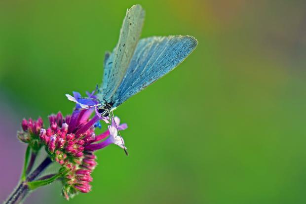 цветок крушины, на котором сидит бабочка\