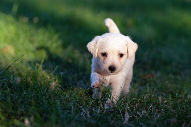 щенок в зеленой траве