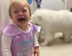 Этой милой девочке не разрешили есть корм для собак.