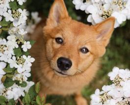 Забавные фото животных: собака по кличке Кико «портит» снимки с другими питомцами