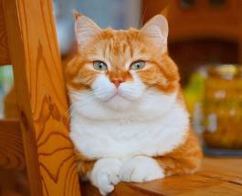 Милые фото кота по кличке Джинджер который очень любит снег
