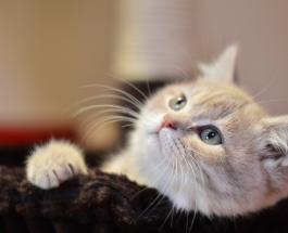 Трогательные фото котов для поднятия настроения: 15 невероятно милых животных