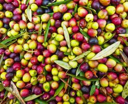Чем полезны оливки: 6 причин добавить плоды в ежедневный рацион
