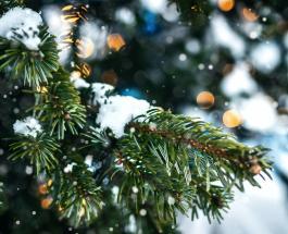 Крещенский сочельник 2021: смысл и традиции дня 18 января