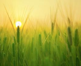 Простой визуальный тест: выбранное изображение восхода расскажет о ближайшем будущем