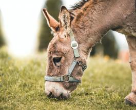 Забавное видео про животных: осел радующийся новой игрушке развеселил пользователей сети