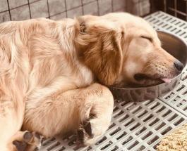 Забавные фото спящих собак: топ-15 животных отдыхающих в неудобных позах