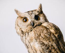 История спасения совы из вентиляции заброшенного отеля в Великобритании