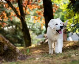 Милое видео про животных: знакомство щенка и козленка растрогало пользователей сети