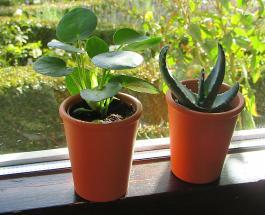 4 важных совета по уходу за комнатными растениями в любое время года