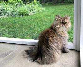 «Грустный» кот стал звездой сети: милые фото питомца по кличке Барнаби