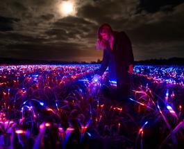 Светодиодная подсветка на полях Голландии: видео восхитительной арт-инсталляции