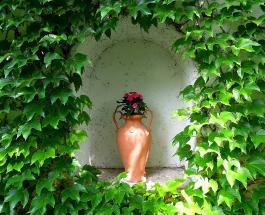 Комнатные растения и характер: какой цветок стоит завести в доме каждому знаку Зодиака