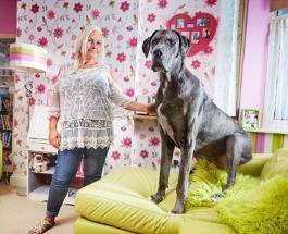 Умер рекордсмен Книги Гиннесса: самый высокий пес скончался в возрасте 8 лет