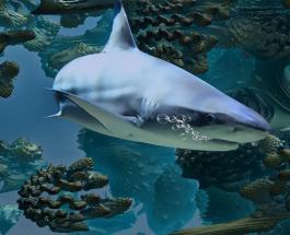 Популяция акул сократилась на 70 процентов: морские хищники могут исчезнуть с лица Земли