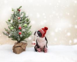 Рождественские песни: топ-10 праздничных мелодий для поднятия настроения