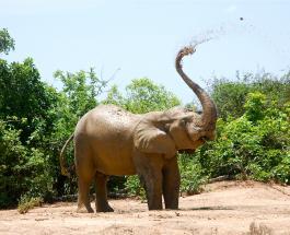ИИ на страже сохранения популяции слонов: ученые считают животных из космоса
