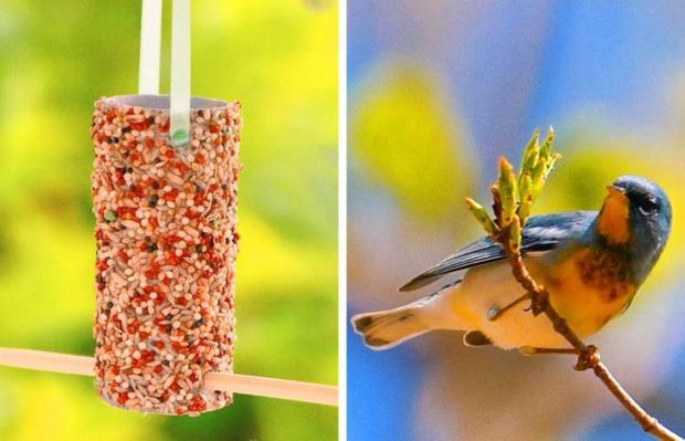 кормушка для птиц, птичка на ветке