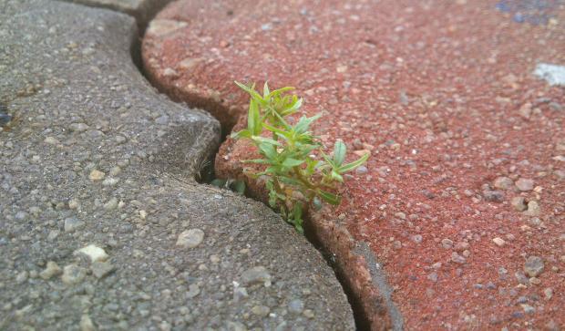 росток, пробившийся сквозь асфальт