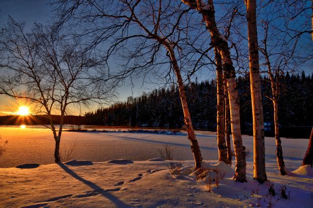 заснеженный лес на закате