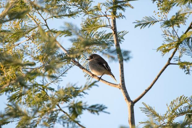птичка на елке сидит