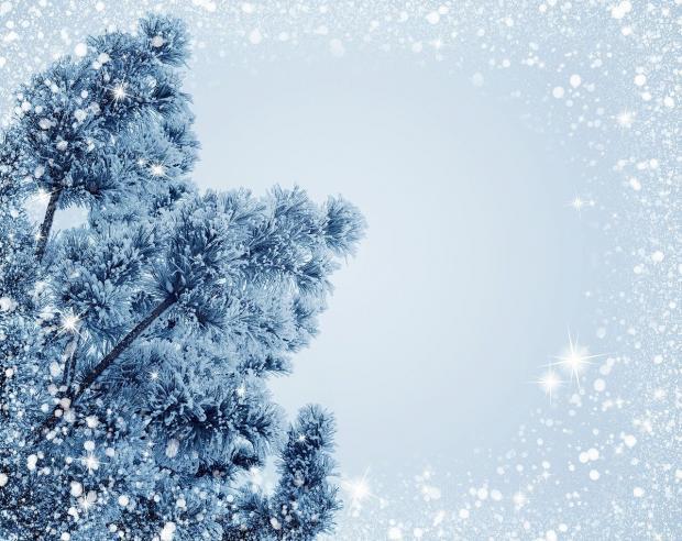 заснеженные ветви дерева на фоне зимнего неба