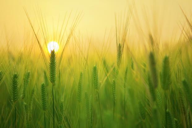 Зелень в поле