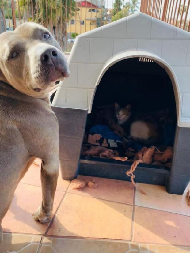 Пес и кошка в будке