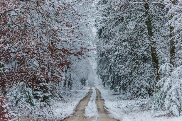 заснеженная дорога в лесу
