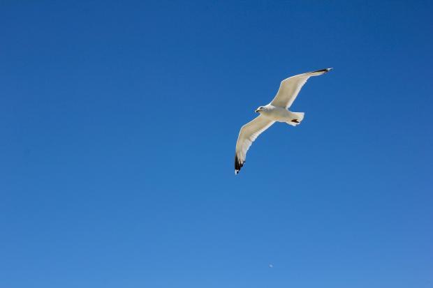 птица летит в небе