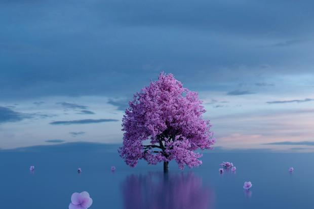 цветущие вдалеке дерево, цветы