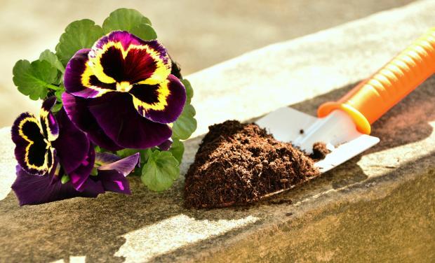 земля на лопатке, комнатный цветок