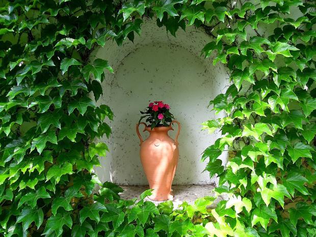 красные цветы растут в высокой напольной вазе из керамики