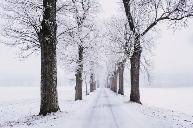Заснеженные деревья и дорога