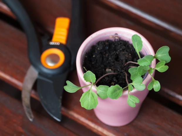 как пересаживать комнатные растения