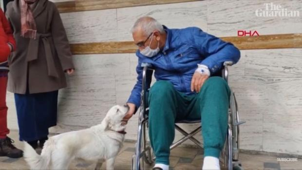 собака ждет хозяина под больницей