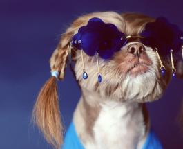 Самая ухоженная в мире собака: фото стильного щенка Даки, за которым следят 11 000 подписчиков