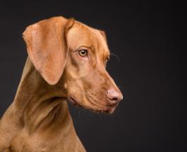 Точность до 94 процентов: в Германии научили собак искать по запаху людей с Covid-19