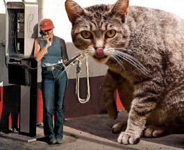 Гигантские коты правят всем миром: забавные фотоработы креативного дизайнера