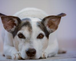 До и после: фото собак выросших из милых щенков в больших домашних любимцев