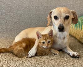 Четвероногая няня: собака помогает хозяйке ухаживать за бездомными котятами
